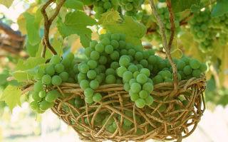 Домашняя настойка из винограда на водке или спирте — рецепты без строгих регламентов