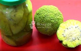 Домашняя настойка адамового яблока – рецепт и применение