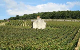 Вина Chardonnay (Шардоне) – виды напитка и культура употребления