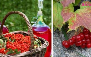 Домашнее вино из калины: очень необычные, но вкусные рецепты алкоголя