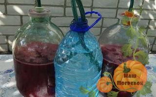 Вино из вишни с косточками в домашних условиях: простой рецепт