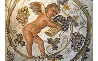 История вина и виноделия: появление и важные этапы развития