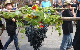 Beaujolais-Nouveau (Божоле-Нуво): ноябрьский праздник молодого французского вина