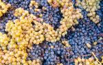 Вина Каталонии: сорта винограда и стили испанских напитков, известные бренды