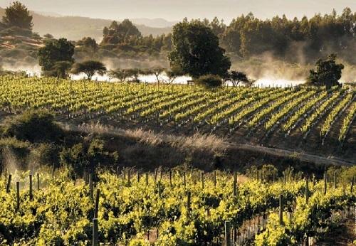 Вина «Нового Света»: список стран и особенности виноделия