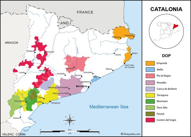 Вина Каталонии: история особенности региона, известные марки
