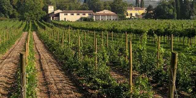 Вино Вальполичелла: особенности, виды и культура пития