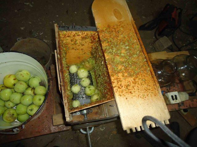 Яблочное вино в домашних условиях – рецепт и приготовление