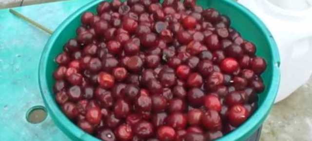 Самогон из вишни в домашних условиях - рецепт вишневой браги