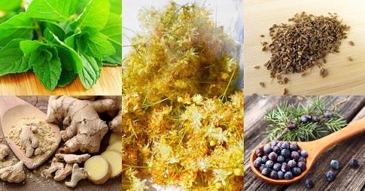 Липовая настойка – 2 рецепта водки (самогона) на цвете