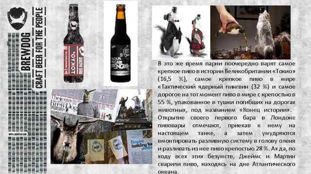Пиво Брю Дог (brewdog): описание, история и виды марки