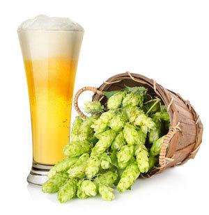 Хмель для пива: виды, сорта, формы, страны выращивания