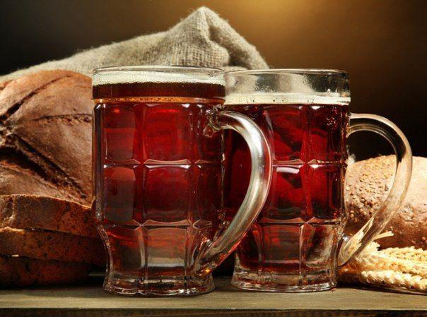 Домашнее пиво из квасного сусла (концентрата) – рецепт