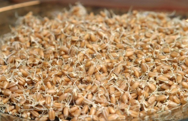 Выбор воды для браги из зерна